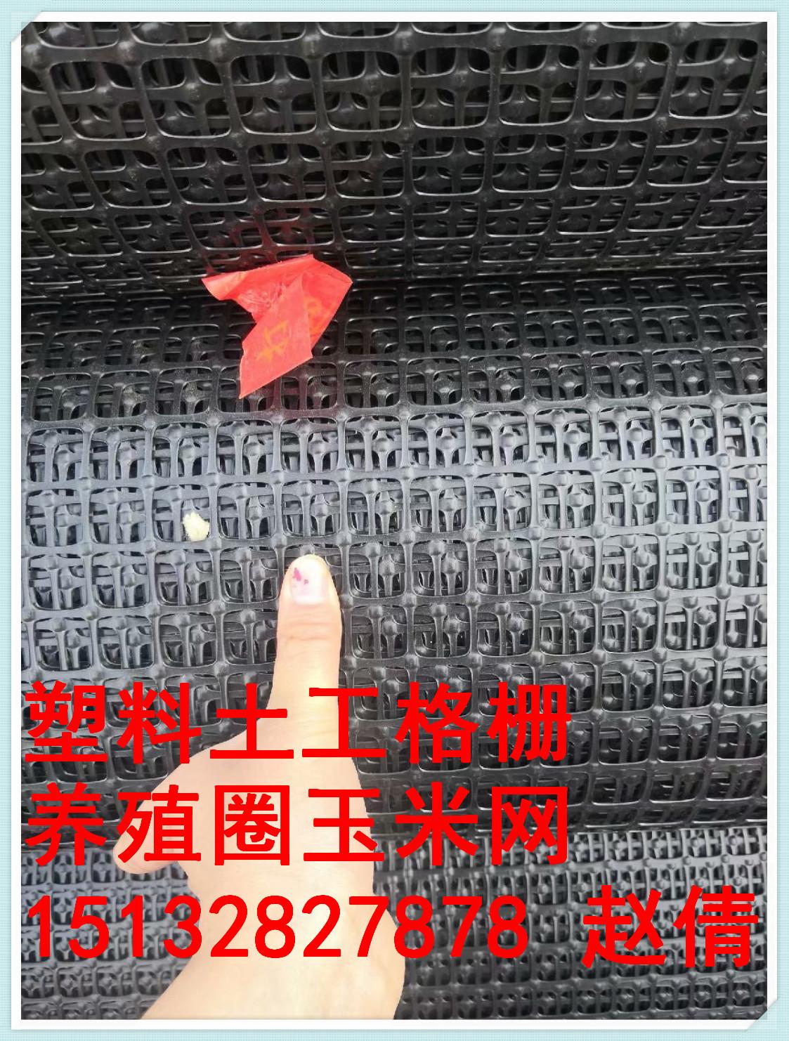 河北安平塑料土工格栅养殖土工格栅围网厂家