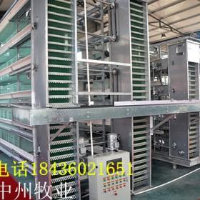 新型自动化养鸡设备 自动化捡蛋机厂家生产批发