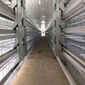 专业生产养鸡笼设备自动化笼养设备