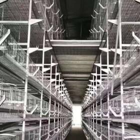 中州牧业大量生产自动化鸡笼设备 层叠式肉鸡笼