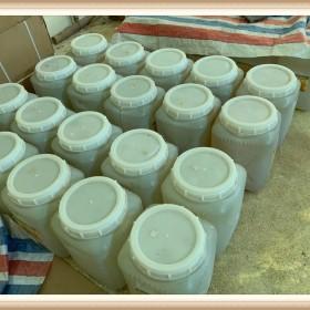 沉香种植基地沉香纯露生产厂家