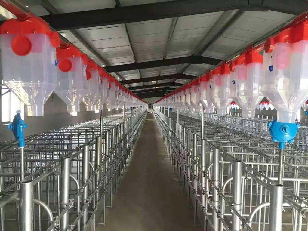 吉林省猪舍料线 全自动养猪设备 猪场料线设计安装